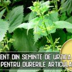 Unguent din seminte de urzica – rereta pentru durerile articulare