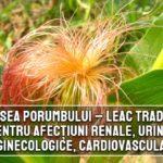 Matasea porumbului - leac pentru afectiuni renale