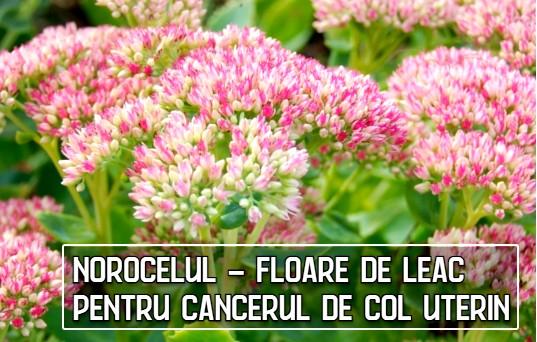 Norocelul - floare de leac pentru cancerul de col uterin (dr. C-tin Parvu)
