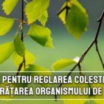 Reteta pentru reglarea colesterolului si curatarea organismului de toxine