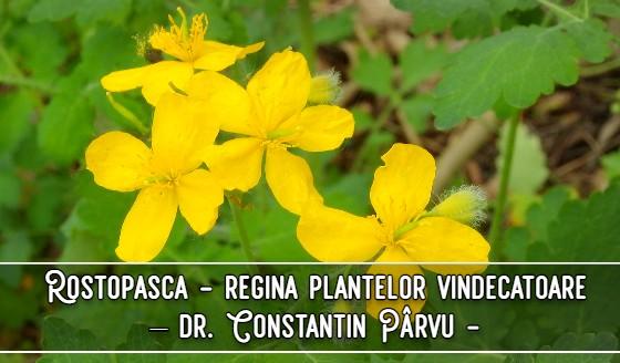 Rostopasca este regina plantelor vindecatoare – dr. Constantin Pârvu