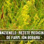 Sanzienele – retete medicinale recomandate de farmacistul Ion Bobaru