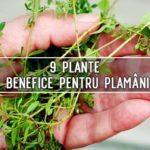 9 plante benefice pentru plamani