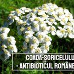 Coada soricelului – antibioticul romanesc