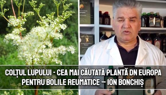 Coltul lupului - cea mai cautata planta dn Europa pentru bolile reumatice si articulare – Ion Bonchis