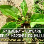 Patlagina - tratamente recomandate de dr. C-tin Parvu