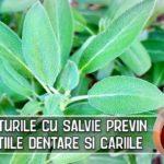 Spalaturile cu salvie previn infectiile dentare si cariile