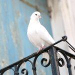 Ce înseamna sa fim intelepți ca serpii si blanzi ca porumbeii?