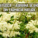 Cretusca – aspirina blanda din farmacia naturii