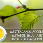 Mesteacanul accelereaza metabolismul, ajuta in hipotiroidism si obezitate