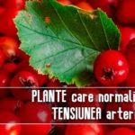 Plante care normalizeaza tensiunea arteriala