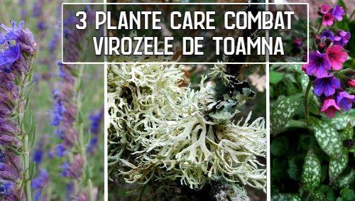 Trei plante care combat virozele de toamna