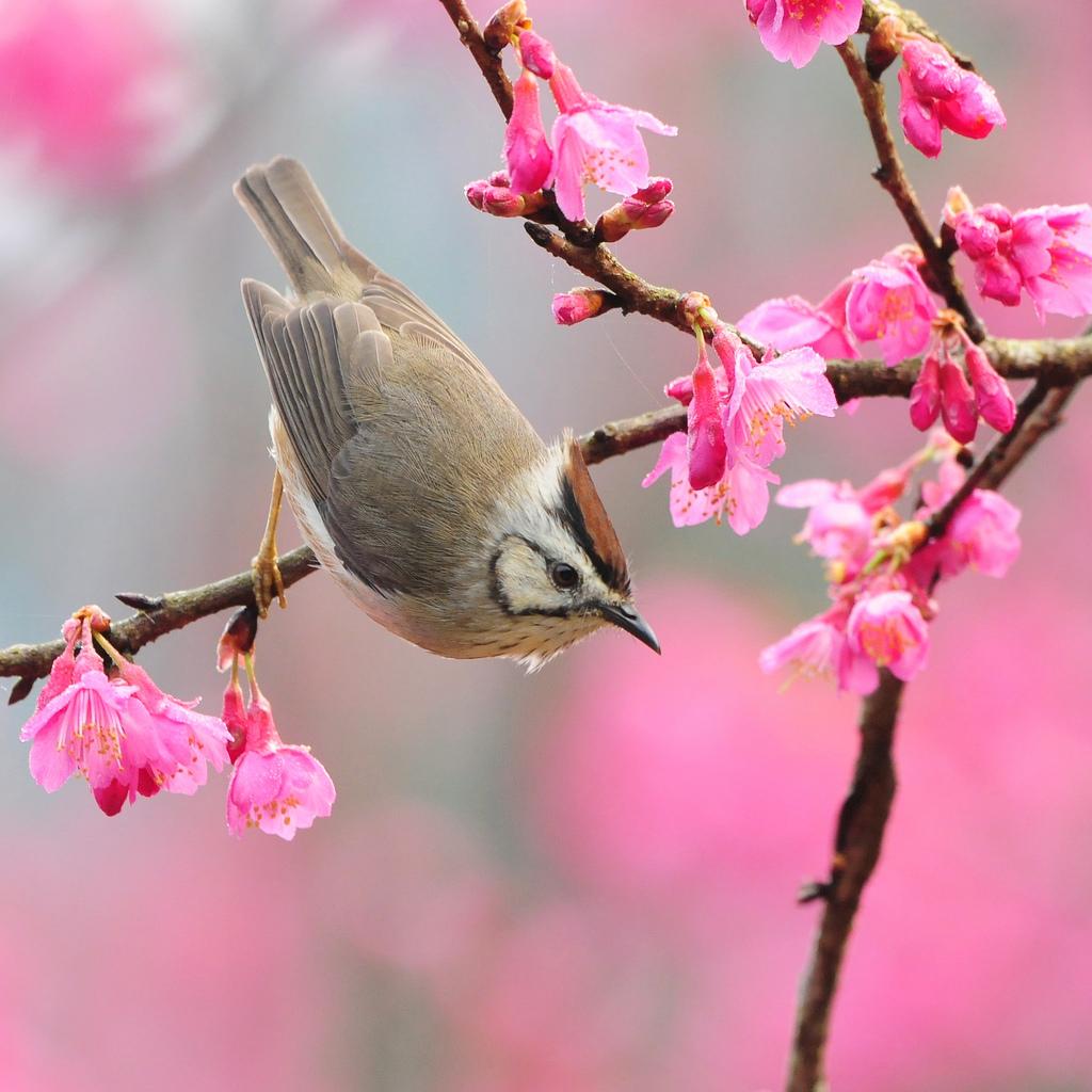 Astenia de Primăvară. Simptome şi Remedii Naturiste
