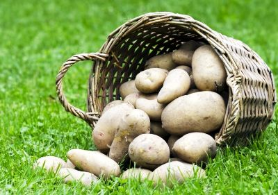 Cartoful – Un Aliment cu Virtuţi de Medicament
