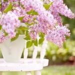 Lilacul Ca Floare Vindecătoare