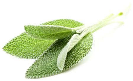 Ceaiul de Salvie: Slăbeşte, Combate Transpiraţia şi Întăreşte Nervii