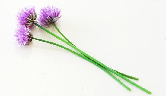 Gastrita Pe Fond Nervos – Tratament cu Obligeană și Valeriană (Image courtesy sxc.hu)