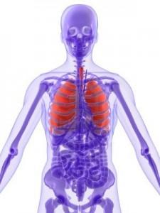 anatomia--pulmon