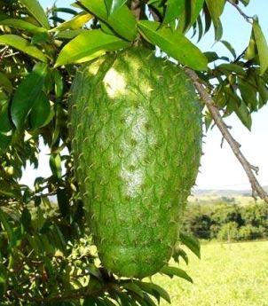 Fructul Graviola (Soursop) – Beneficii și Tratamente