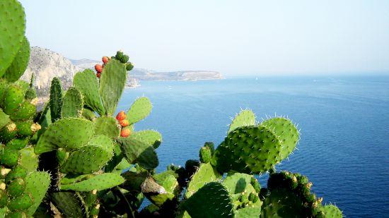 Dieta Mediteraneană Previne Bolile de Inimă și Cancerul – Studii și Sfaturi (sxc.hu)