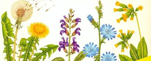 Lunile în Care se Culeg Plantele Medicinale