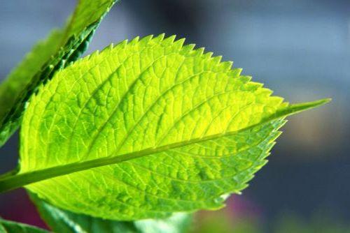 Pietre la Rinichi și Bilă – Simptome, Tratamente Naturiste