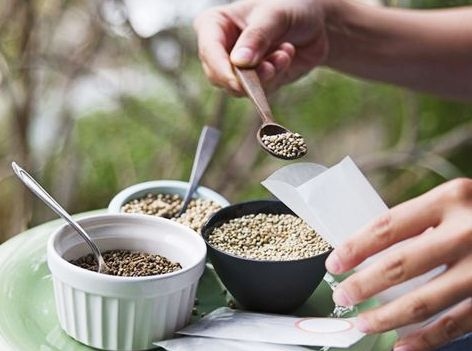 Infecții Urinare cu E. Coli – Tratament Naturist cu Semințe de Chimen și Coriandru