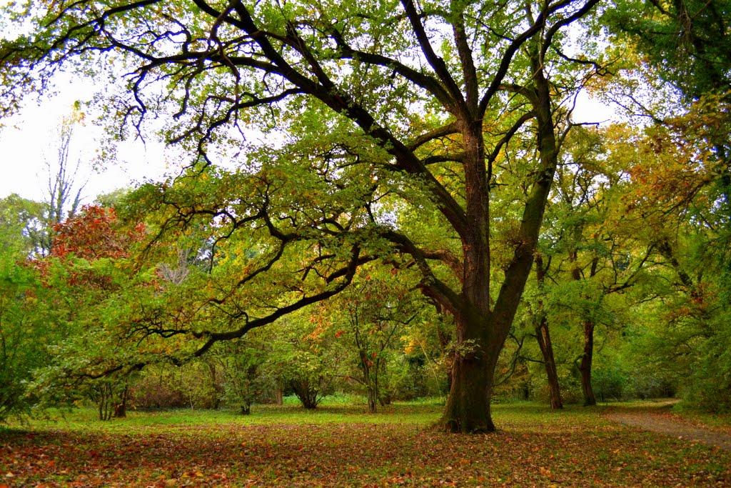 Arboretumul-Simeria-7