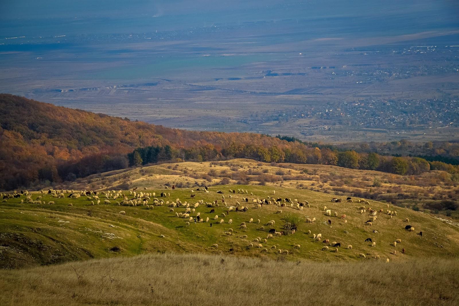 Imagini pentru dealul istrita