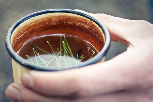 Ceai de Pin