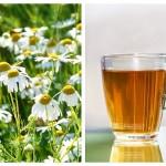 Ceaiul de Mușețel Combate Diabetul