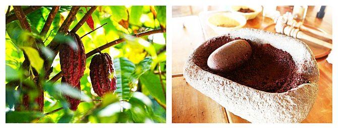 Cacao - Beneficii Extraordinare