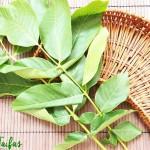 Frunze de Nuc Tratamente