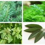 Plante Vindecătoare din Bucătărie