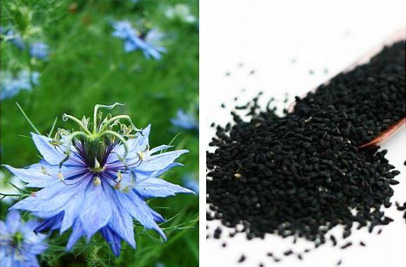 Semințe de Negrilica (Nigella Sativa)