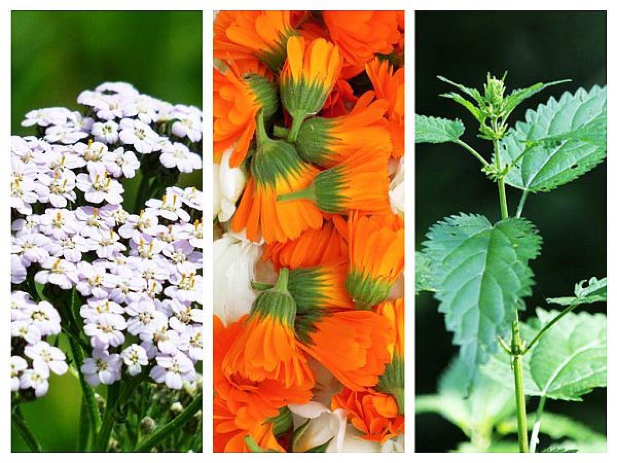 Plante medicinale eficiente pentru vindecarea a 7 tipuri de cancer – AIM Group