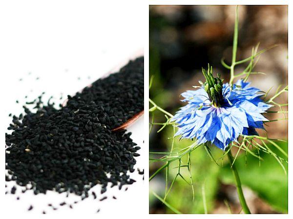 Semințe de Chimen Negru Negrilică