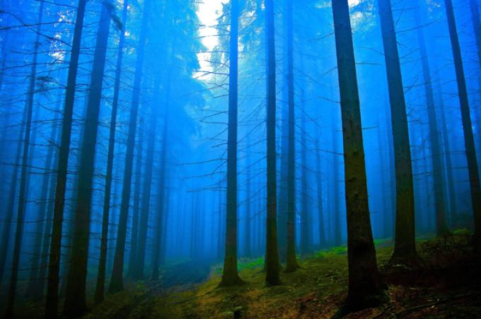ceata albastra