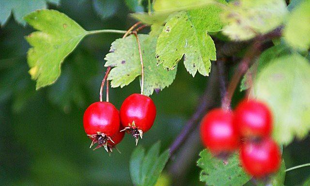 Tahicardie - Simptome, Remedii Naturiste