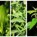 Căi Respiratorii Înfundate - Remedii Naturiste Maria Treben