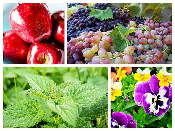 Alimente Anti-Alergice