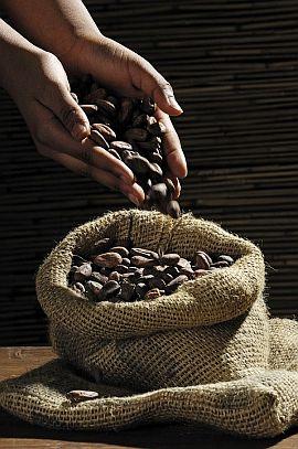Boabe de Cacao