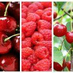 Cireșe, Vișine și Zmeură Antiinflamatoare