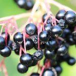 Fructe de Soc Pentru Slăbit