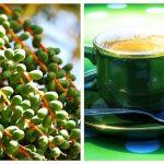 cafea verde pentru slabit studii