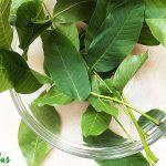 Frunze Nuc - Transpirație