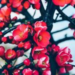 Iubirea de Vrăjmași - Sfântul Siluan Atonitul