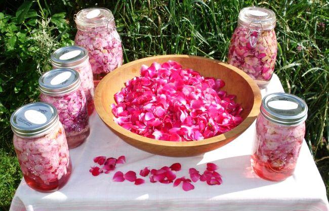 tinctura de trandafiri reteta si beneficii