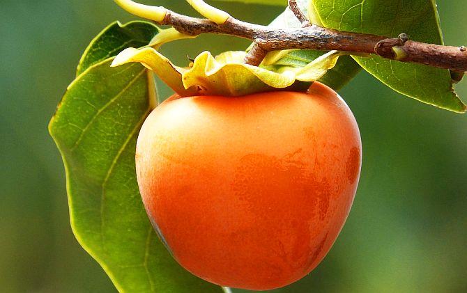 Fructul Kaki