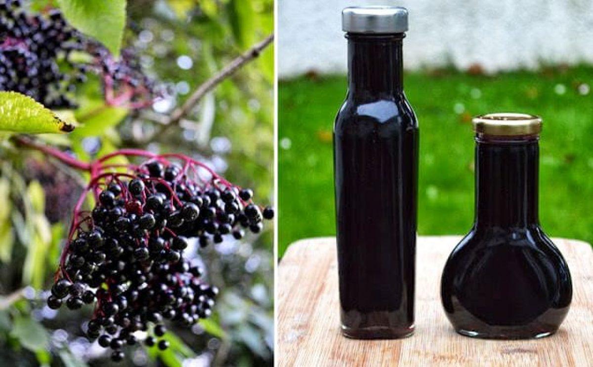 Sirop Din Fructe De Soc și Ghimbir Cel Mai Puternic Medicament